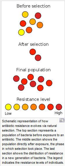 !Superbugs1