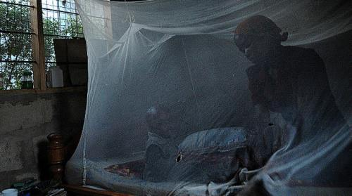 !Malaria1