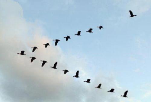 !!!!!MigratingWaterFowl1