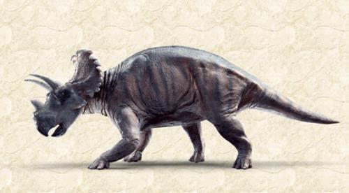 !!!!!NewHornedDinosaur1